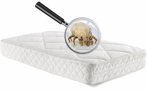 Matratzenreinigung - Hausstaubmilbe auf Bett